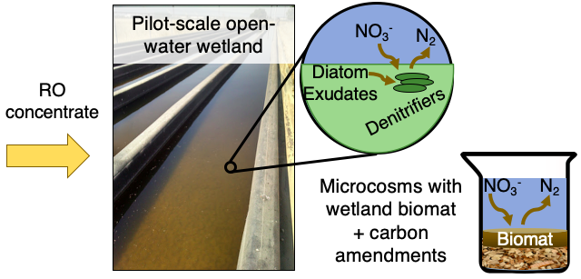 graphical abstract depicting nitrate reduction in a wetland biomat